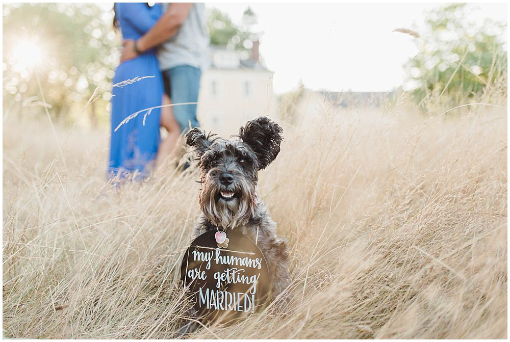 Romantic Discovery Park engagement photo with adorable Schnauzer dog wearing a my humans are getting married sign | Julianna J Photography | juliannajphotography.com