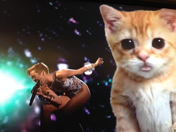miley-cat-performance