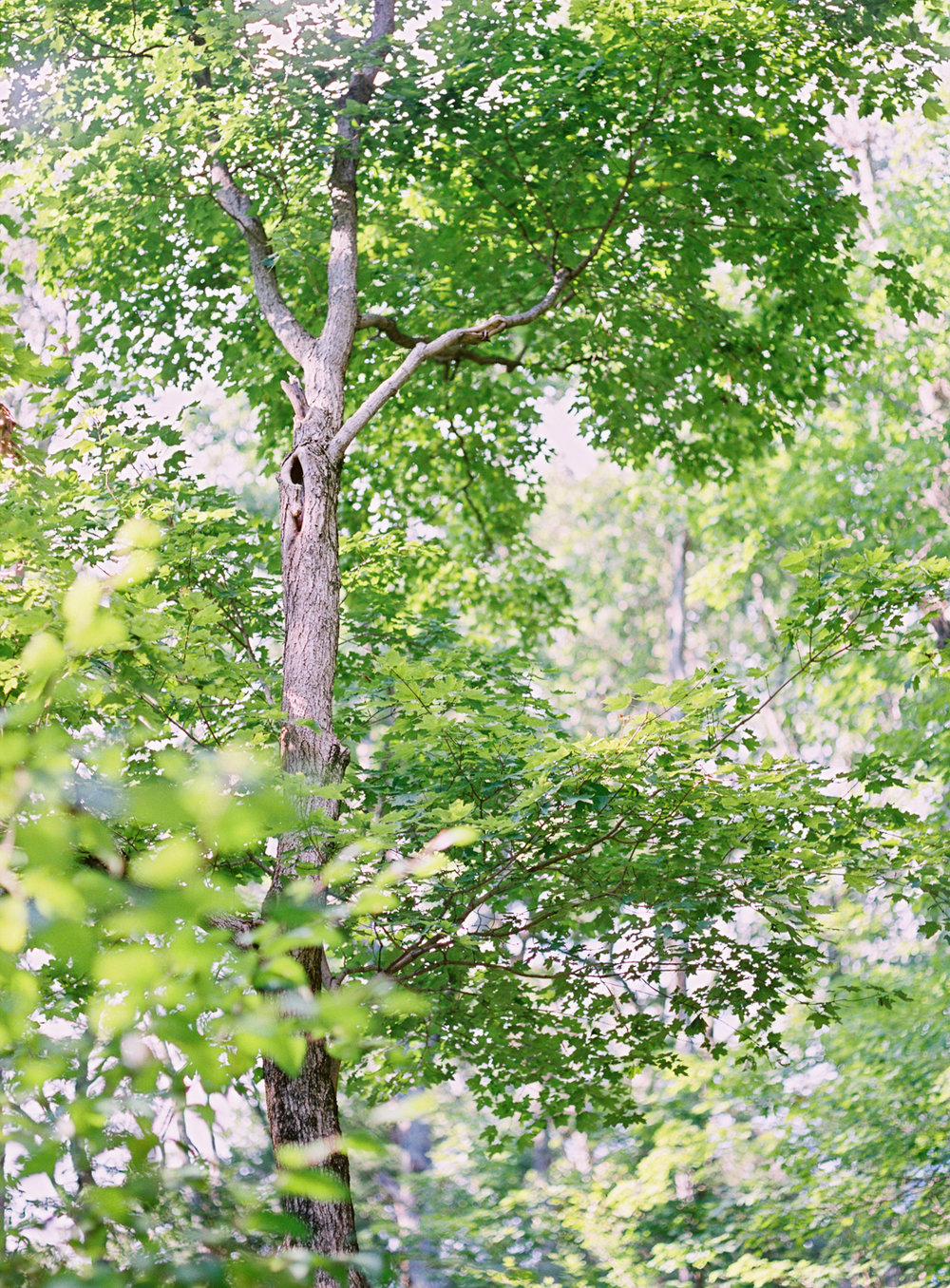 Leaf-&-Pine-Lindsey-Kaiphen-Wedding-20.jpg