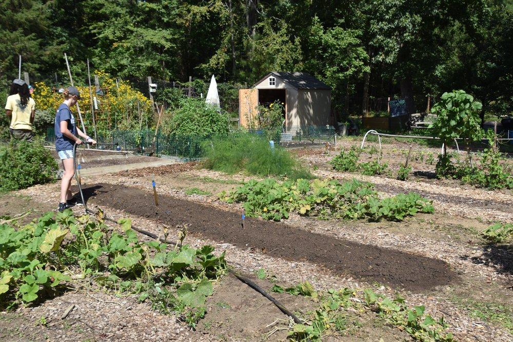 DSC_0448. Hope Gardens