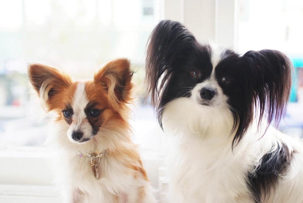 Pets_Portraits_8151_3425.jpg