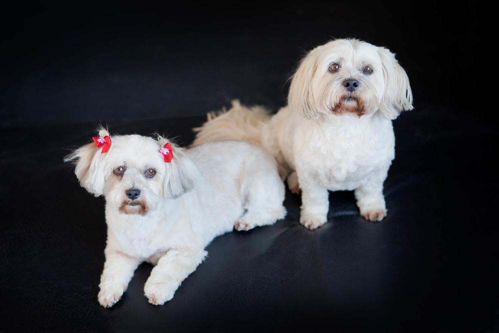 Pets_Portraits_16746_2528.jpg