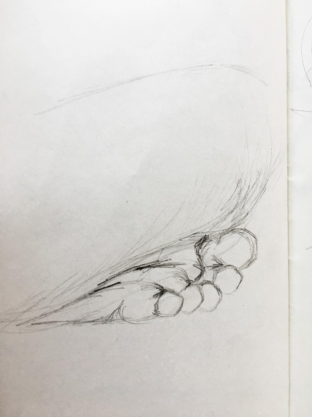 Arletta Foot Study.png