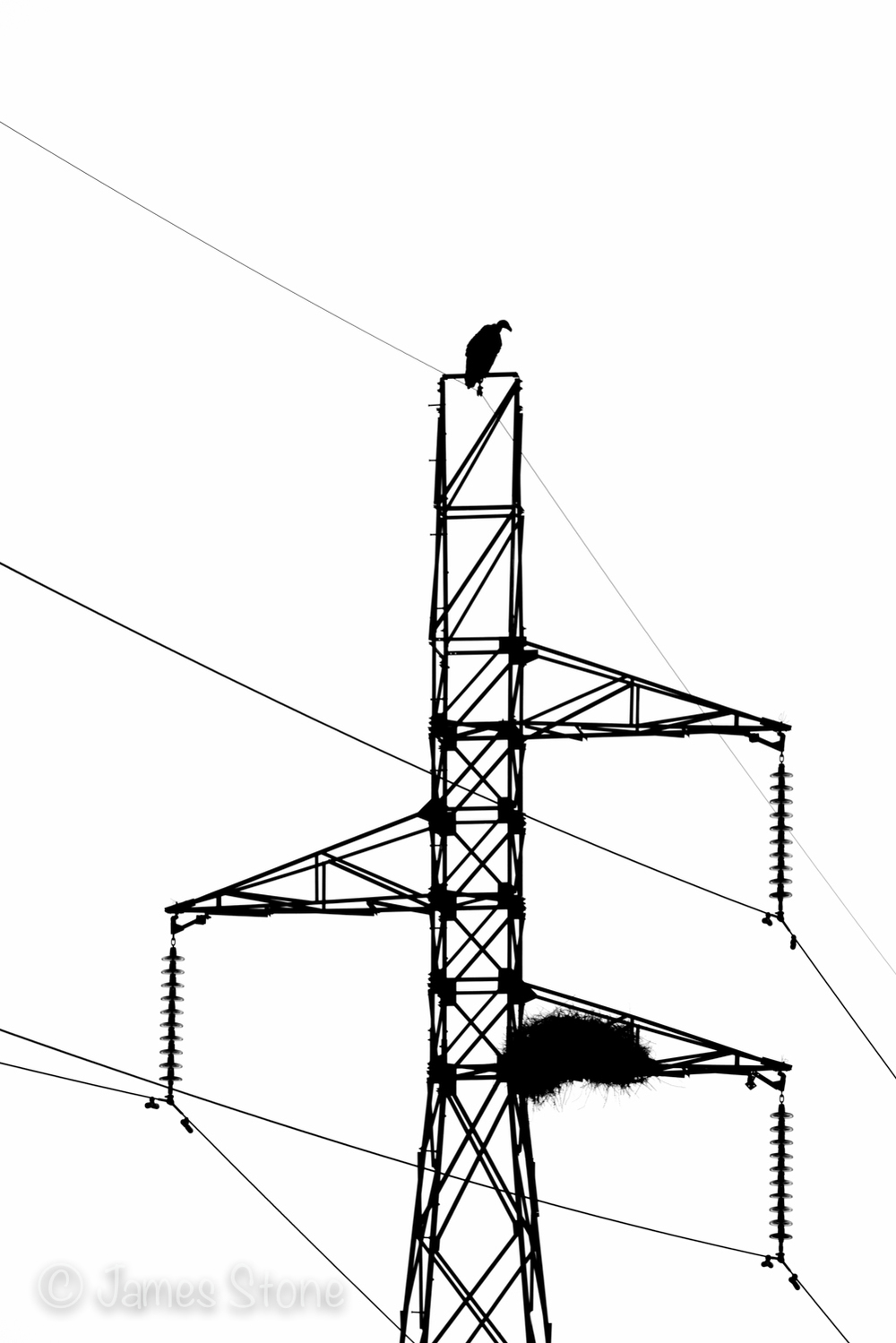 Perched on high electricity