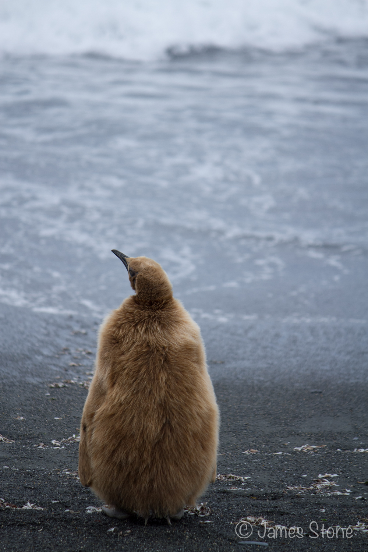 Pondering the ocean1