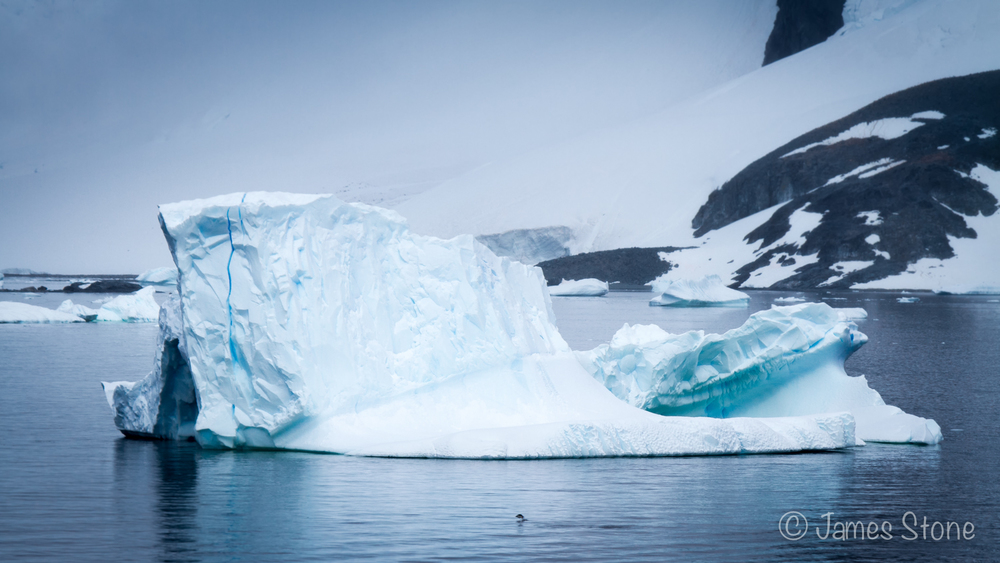 Penguin v Berg1