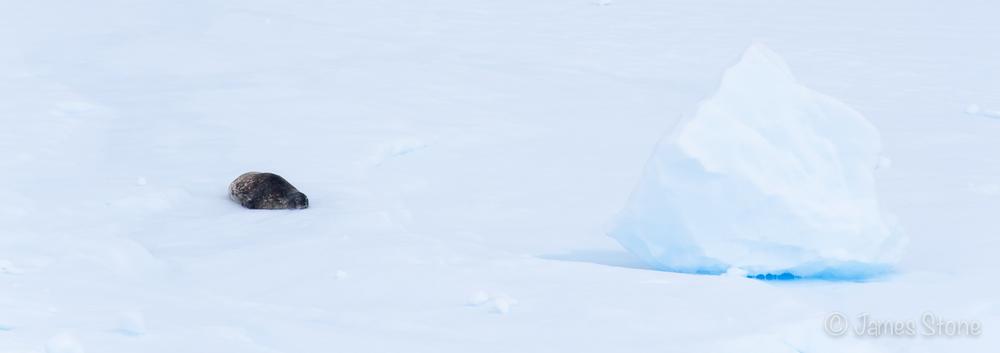 Weddell ice cube