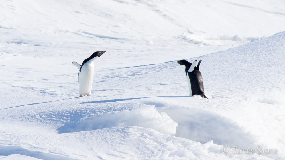 Antarctic Stand-off
