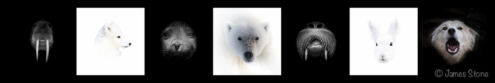 Portraits of the Arctic