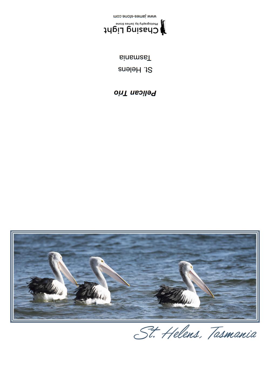 Pelican Trio.png