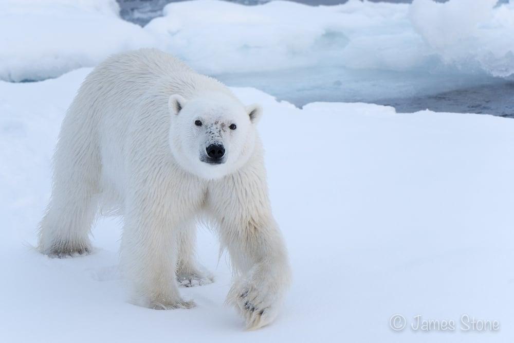 A bear approaches