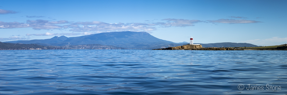 Dolphins in front of Mt Wellington