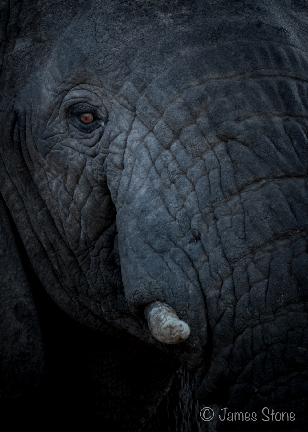 Elephant's stare