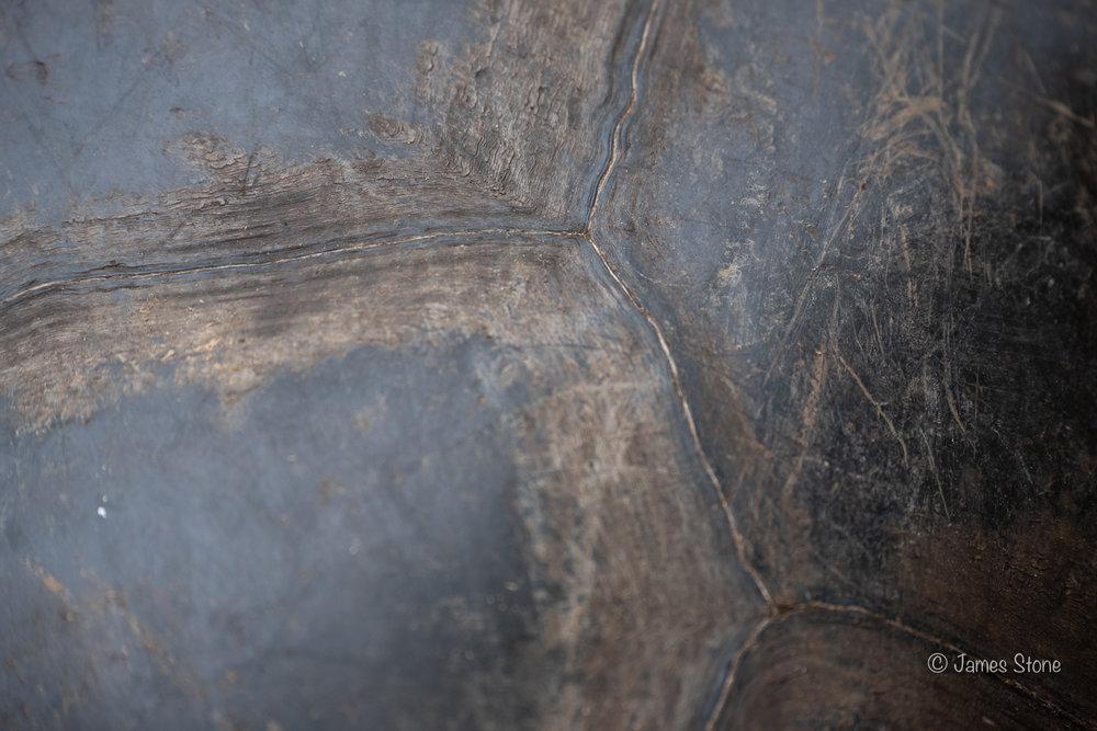 Tortoise Shell 3