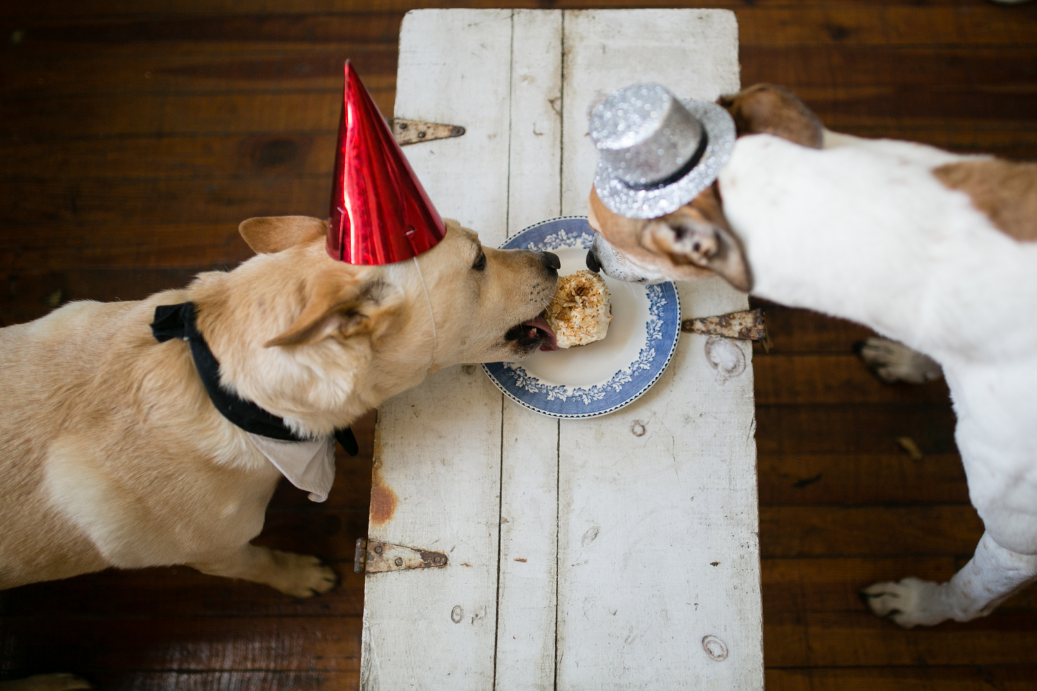 The Barkday Store Cakes