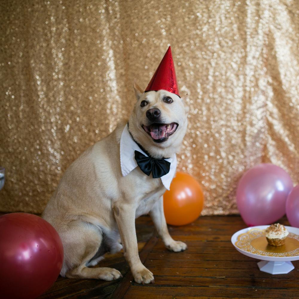 Barkday cakes_000 (1).jpg