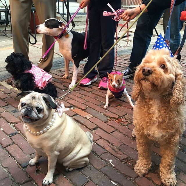 Yay! Murray's birthday party was a hit!! We made him teensy Shrimp Cakes with Nori Frosting, and he shared with his friends 🐶💕🎂 #barkdaycakes #dogsofphilly #dogparty #dogsofig #buzzfeedanimals #cute 📷: @wendyramunno