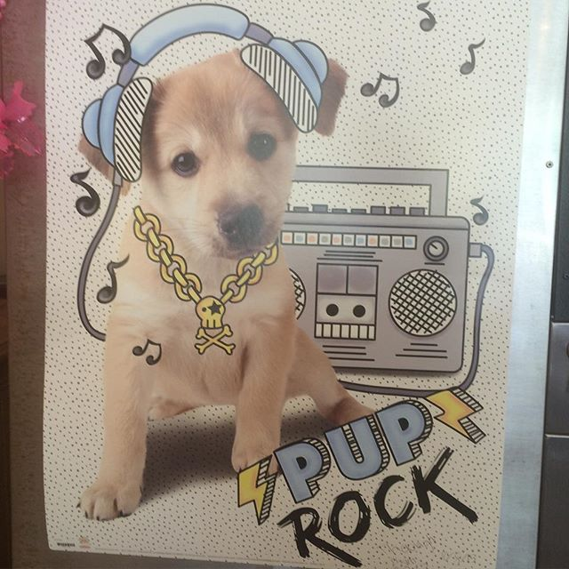 Loving this cute poster that @dirtybirdpaperco spotted at her local Vietnamese restaurant. 🎉🐶🎸