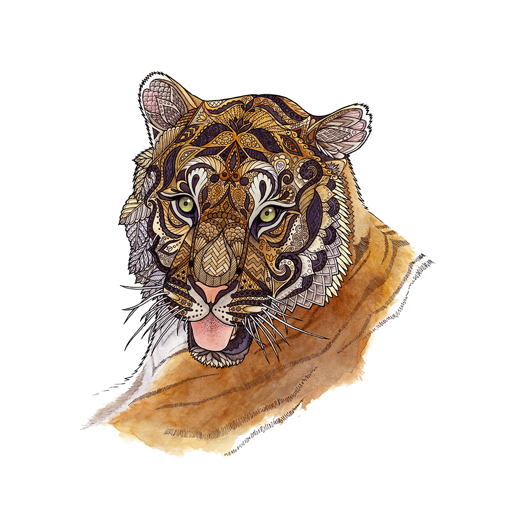 "The adult male tiger can: weigh over 600 pounds, have fangs three inches long, pretty much feel free to stick out his tongue at whomever he likes. Pen and watercolor on Bristol board.   Original available for sale - $125, 9"" x 12"""
