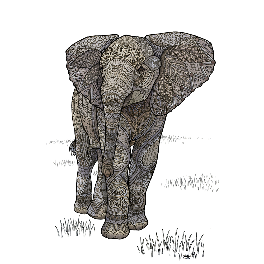 A happy little adolescent elephant, unaware that he's about to trip over his own feet in front of the entire herd. Pen, pencil, and watercolor on Bristol board.