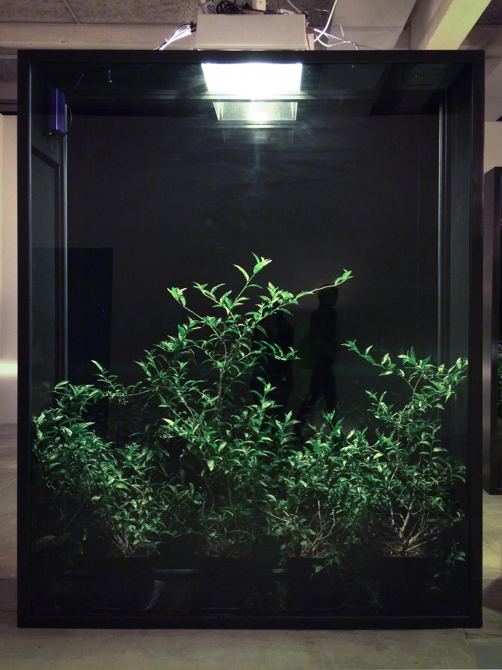 Hicham Berrada,Mesk-ellil,2015.Installation, ensemble of 7 stained glass terrariums, cestrum nocturnum, horticultural lighting, moonlight lighting delay.250 x 200 x 50 cm each,250 x 500 x 500 cm overall.Courtesy Kamel Mennour, Paris.