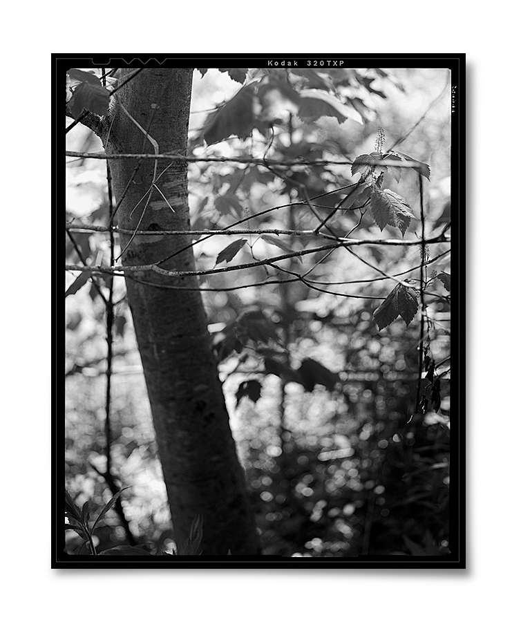 Those I Knew 1 ,     2015  . 4.5   x 5.5   inches. Silver gelatin contact print.