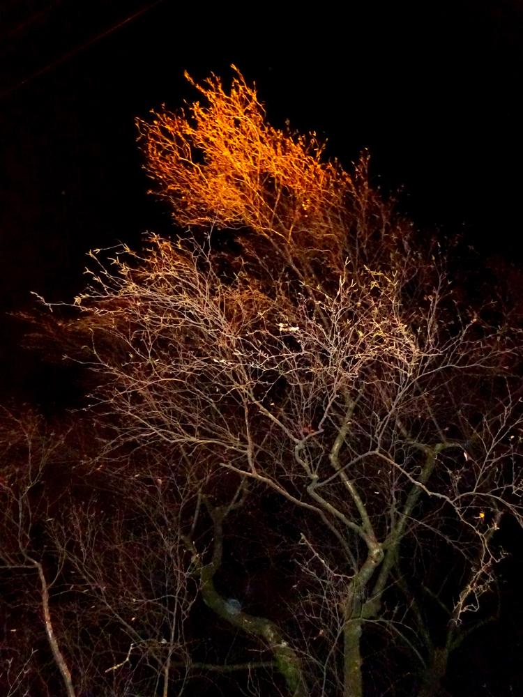 w_Nachtstrauch2_36.jpg