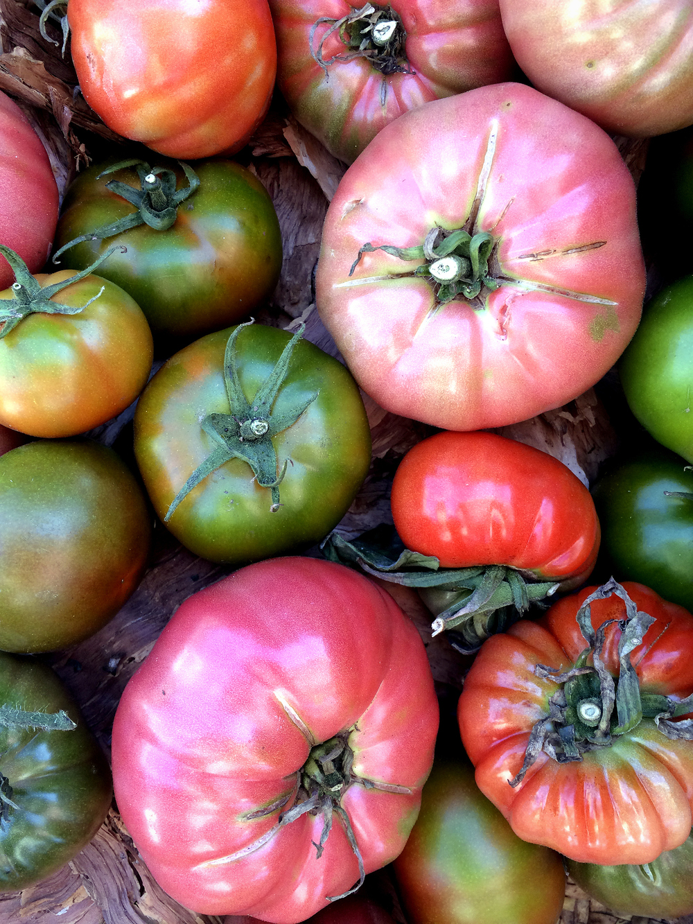 Greenmarket heirloom tomatoes