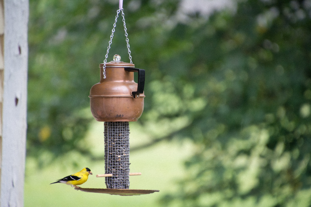 Copper Pot with American Goldfinch