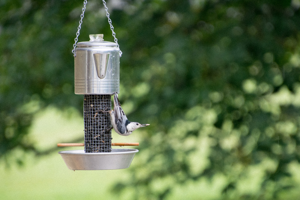 Aluminum Coffee Pot with Nuthatch