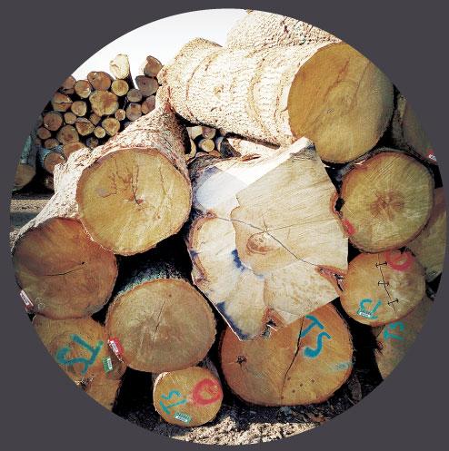 italian lumber.jpg