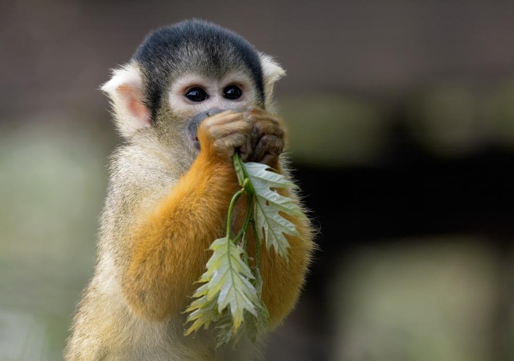 CR-Monkey.jpg