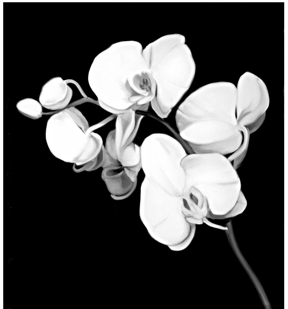 Orchids ( Robert Mapplethorpe 1989 )  Oil On Primed Paper - 23.75 x 21in - 2011