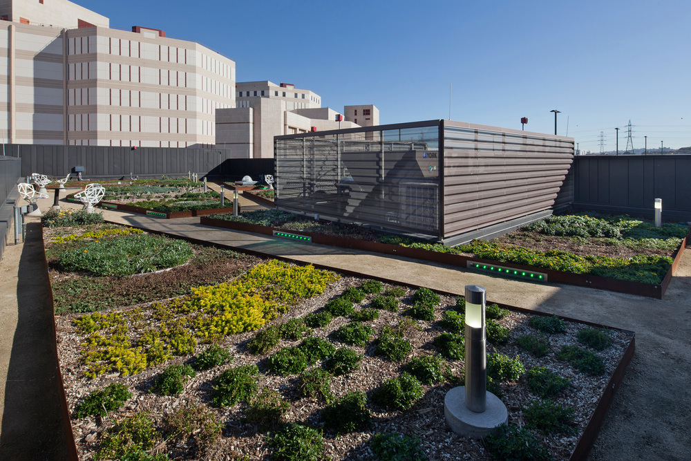 The rooftop garden features native California plants to combat storm water run-off and the urban heat island effect.