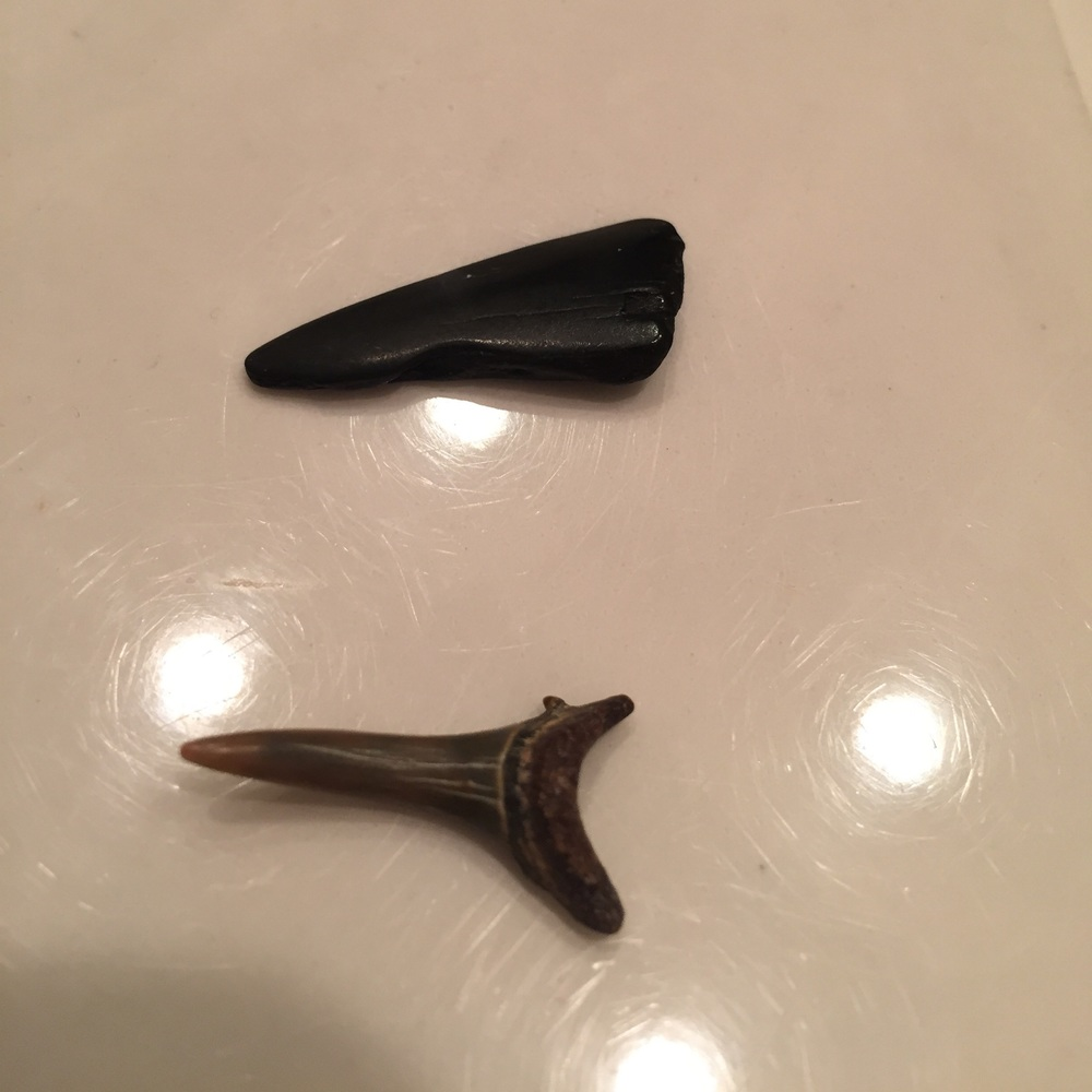 { Hi Shark Week, is that you? These are real shark teeth. If you got the chills, it's cool so did I.}