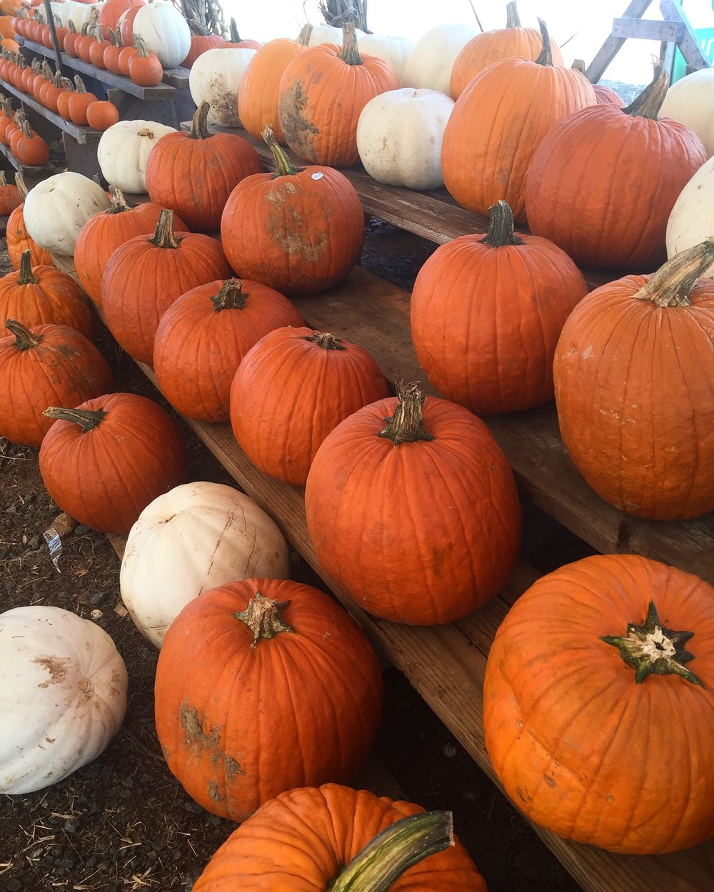 { If you don't take a trip to the pumpkin patch, did fall even happen? }