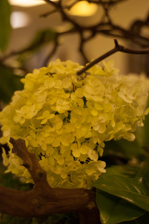 Ikebana, the Japanese art of flower arrangment.