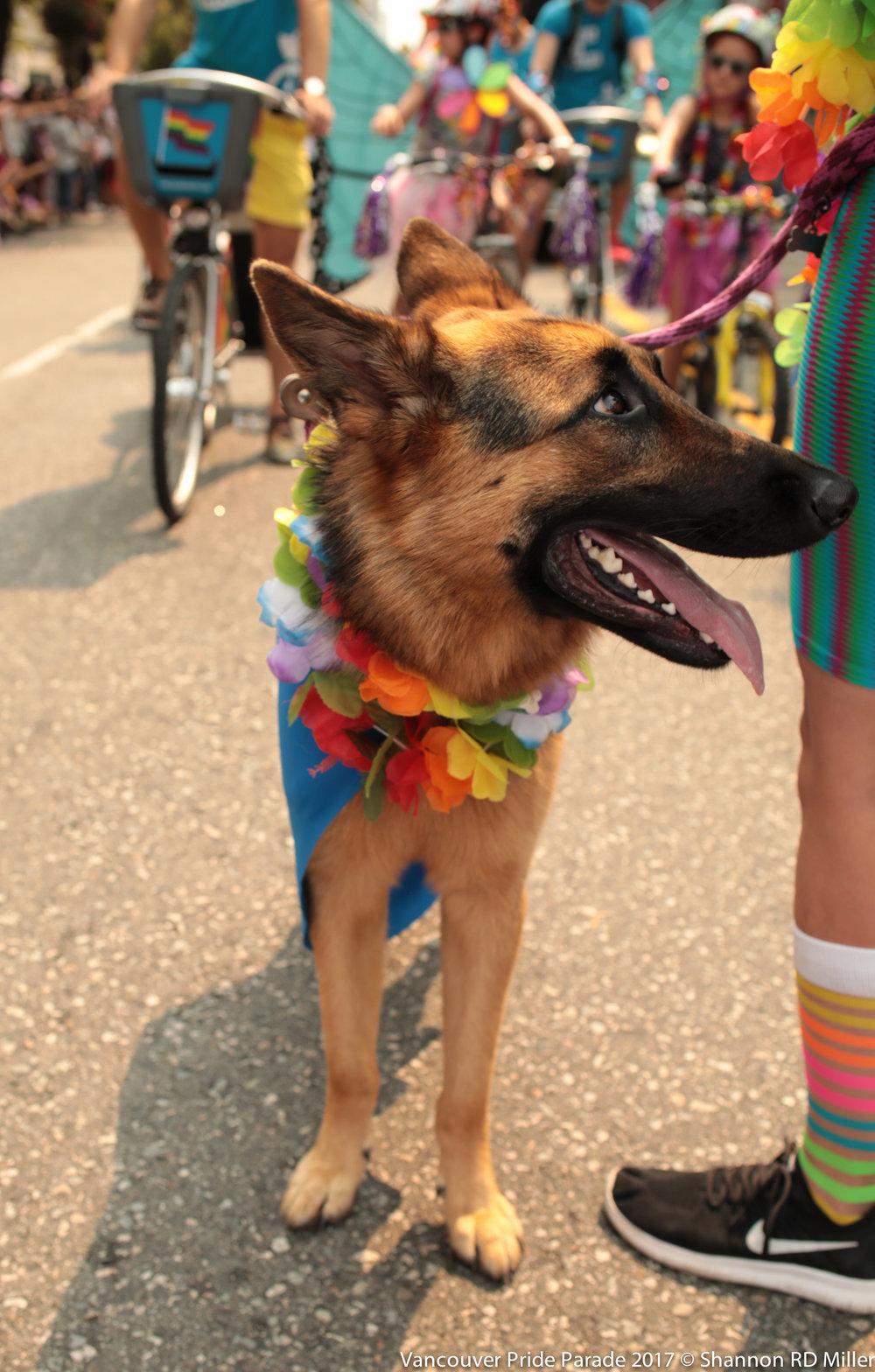 www.shannonruthdionne.com_Pride_Parade_20170806-3286.jpg