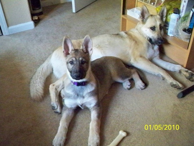 Lexi&Kayla1-5-10.JPG