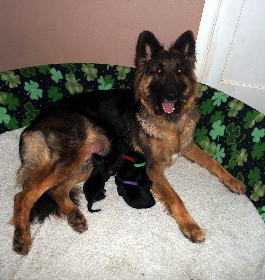 Lily with her new babies happy & safe in our home