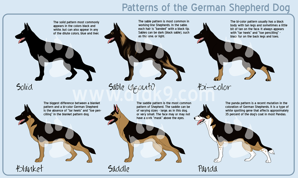 shepherd-patterns-small.png