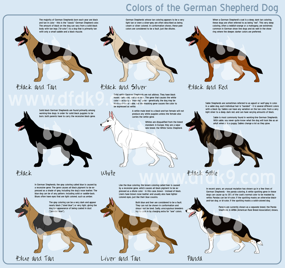 sprague s german shepherds california german shepherd dog breeder