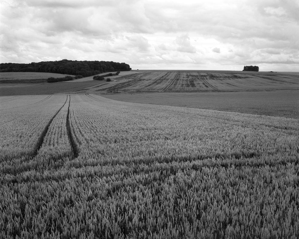 Marne fields