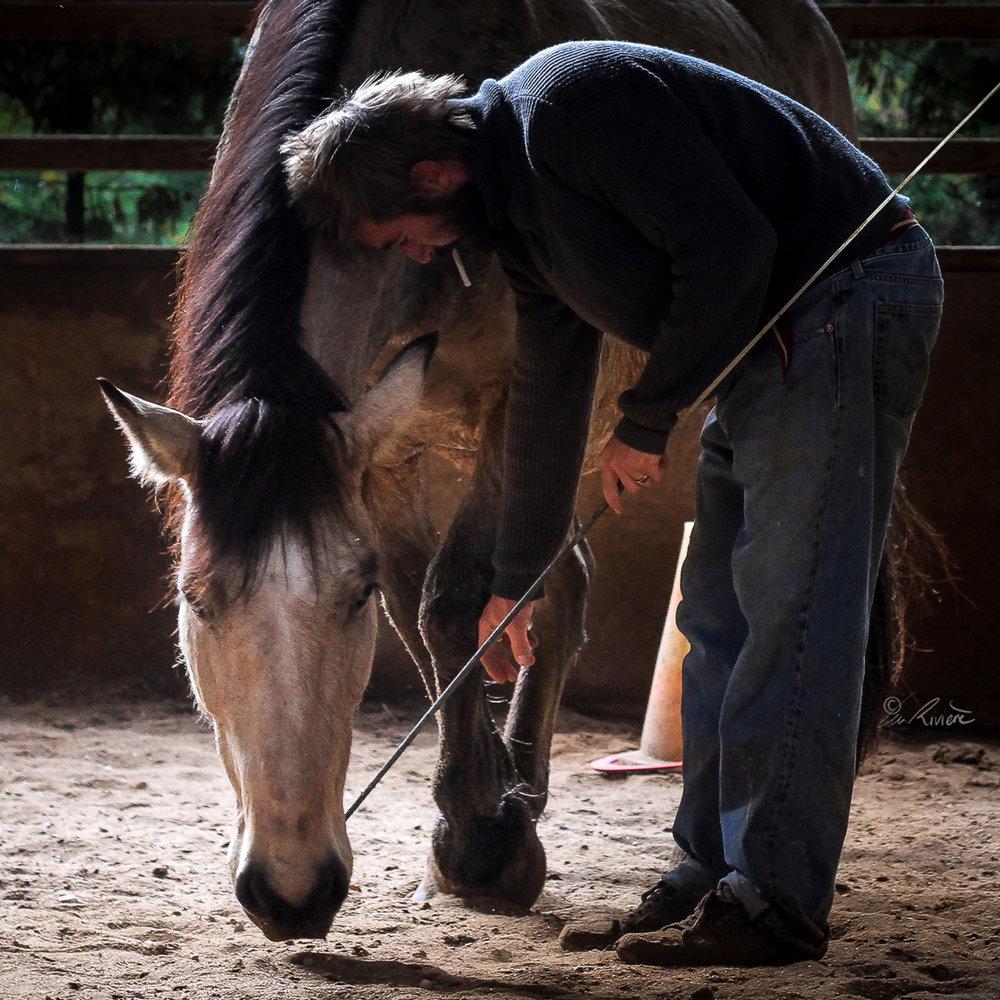 ©LÉA RIVIÈRE_ART_passion_horse2.jpg