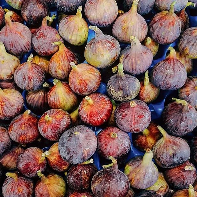 It's a Fig-tastic day today ❤️