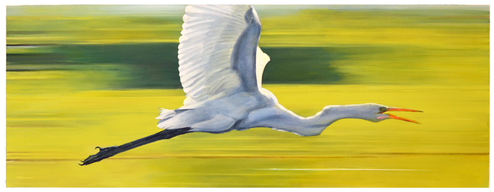 Bird in Flight - Great Egret
