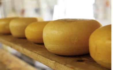 Easy Cheesy Cheese Making Workshop