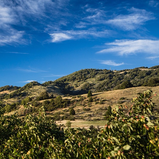 Come to Julian to hike Volcan mountain and check out the winery after. We have a beautiful area to sit, relax, and drink some apple wine. #winenot #wineoclock #winelovers #vino #winery #sandiegomag #lifeandthyme