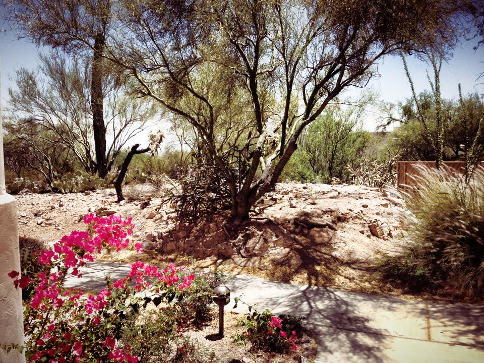 Considering Franky's green thumb, he really enjoyed the desert scenery around Tuscon. (Courtesy @mosyron)