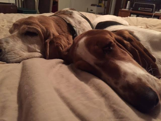 """Sleepy girls after a ruff morning at Dog Days!""   -Lisa Bechtold Fagan"